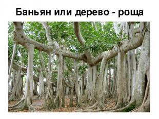 Баньян или дерево - роща