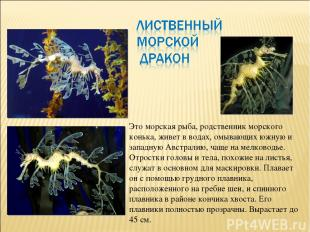 Это морская рыба, родственник морского конька, живет в водах, омывающих южную и