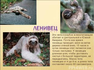 Это неполнозубое млекопитающее обитает в Центральной и Южной Америке. Почти все