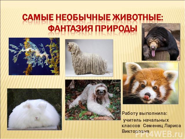 Работу выполнила: учитель начальных классов Семенец Лариса Викторовна