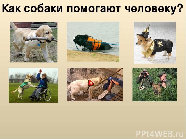 Как собаки помогают человеку?