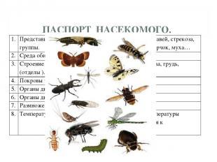 ПАСПОРТ НАСЕКОМОГО. 1. Представители группы. Кузнечик, бабочка, пчела, муравей