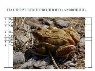 ПАСПОРТ ЗЕМНОВОДНОГО (АМФИБИИ). 1. Представители группы. Жаба, лягушка, тритон,