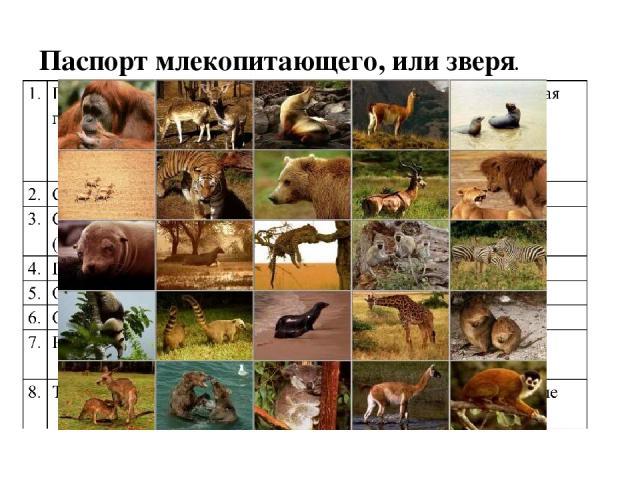 Паспорт млекопитающего, или зверя.