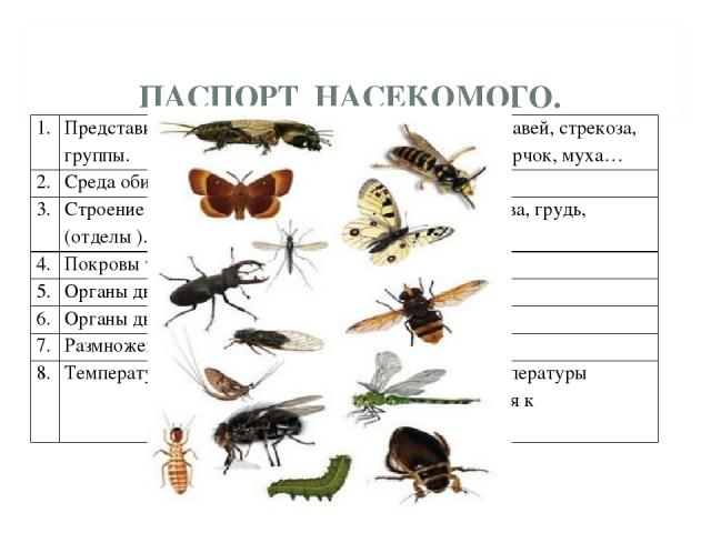 ПАСПОРТ НАСЕКОМОГО. 1. Представители группы. Кузнечик, бабочка, пчела, муравей, стрекоза, божья коровка, светлячок, сверчок, муха… 2. Среда обитания. Вода, воздух, земля. 3. Строение тела (отделы ). Тело делится на 3 части: голова, грудь, брюшко. …