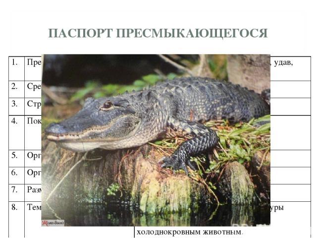 ПАСПОРТ ПРЕСМЫКАЮЩЕГОСЯ 1. Представители группы. Крокодил, черепаха, змея, ящерица, удав, хамелеон… 2. Среда обитания. Преимущественно на суше. 3. Строение тела (отделы ). Голова, шея, туловище, хвост. 4. Покровы тела. Кожа сухая, покрытая роговыми …