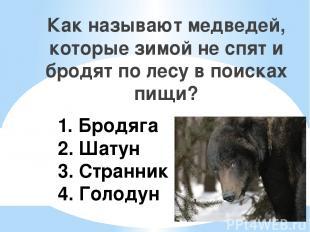 1. Бродяга 2. Шатун 3. Странник 4. Голодун Как называют медведей, которые зимой
