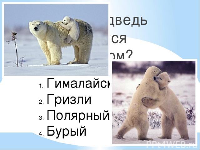 Какой медведь является хищником? Гималайский Гризли Полярный (белый) Бурый