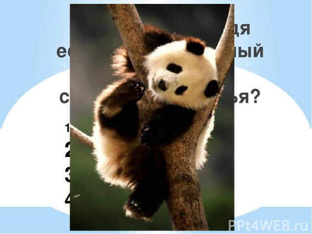1. Гималайский 2. Бурый 3. Панда 4. Губач У какого медведя есть дополнительный палец, который служит для лазанья?