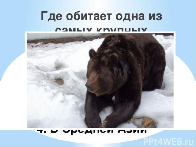 1. На Камчатке 2. На Урале 3. На Кавказе 4. В Средней Азии Где обитает одна из самых крупных естественных популяций бурого медведя?