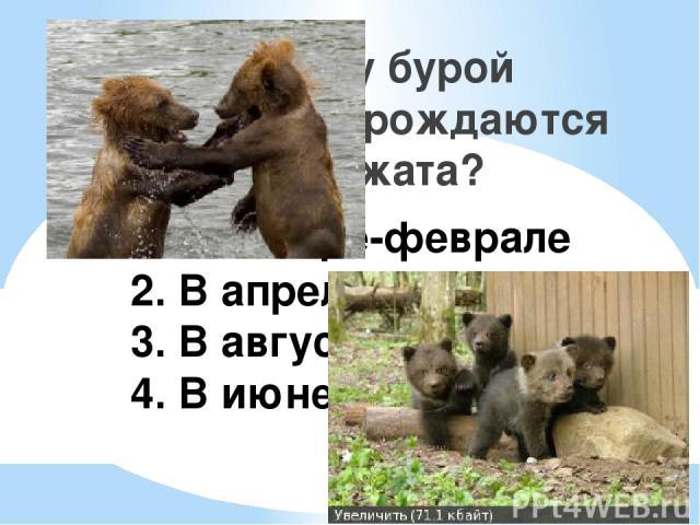 1. В январе-феврале 2. В апреле-мае 3. В августе-сентябре 4. В июне-июле Когда у бурой медведицы рождаются медвежата?
