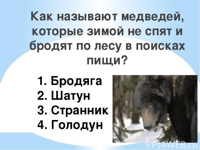1. Бродяга 2. Шатун 3. Странник 4. Голодун Как называют медведей, которые зимой не спят и бродят по лесу в поисках пищи?