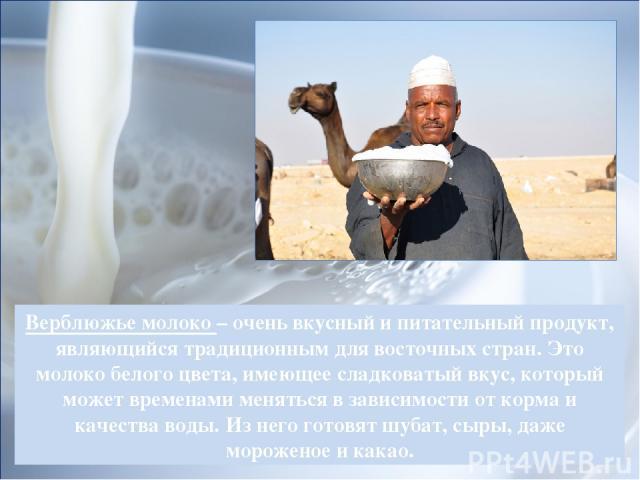 Верблюжье молоко – очень вкусный и питательный продукт, являющийся традиционным для восточных стран. Это молоко белого цвета, имеющее сладковатый вкус, который может временами меняться в зависимости от корма и качества воды. Из него готовят шубат, с…