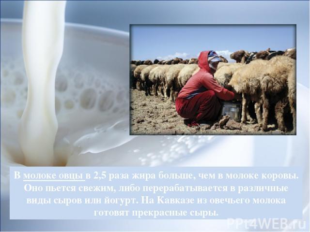 В молоке овцы в 2,5 раза жира больше, чем в молоке коровы. Оно пьется свежим, либо перерабатывается в различные виды сыров или йогурт. На Кавказе из овечьего молока готовят прекрасные сыры.