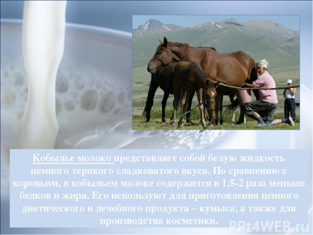 Кобылье молоко представляет собой белую жидкость немного терпкого сладковатого вкуса. По сравнению с коровьим, в кобыльем молоке содержится в 1,5-2 раза меньше белков и жира. Его используют для приготовления ценного диетического и лечебного продукта…