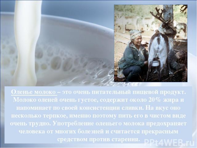 Оленье молоко – это очень питательный пищевой продукт. Молоко оленей очень густое, содержит около 20% жира и напоминает по своей консистенции сливки. На вкус оно несколько терпкое, именно поэтому пить его в чистом виде очень трудно. Употребление оле…