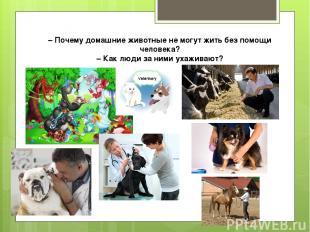 – Почему домашние животные не могут жить без помощи человека? – Как люди за ними