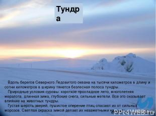 Тундра Вдоль берегов Северного Ледовитого океана на тысячи километров в длину и