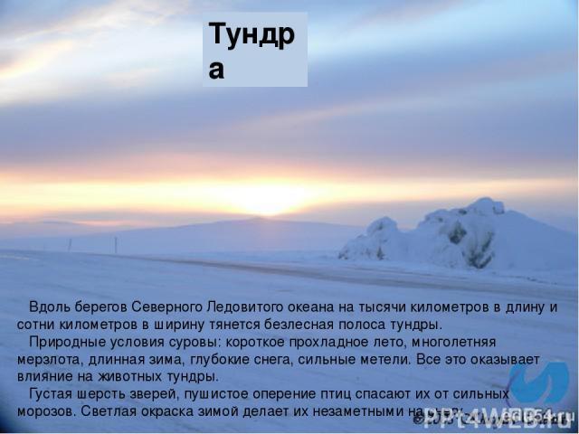 Тундра Вдоль берегов Северного Ледовитого океана на тысячи километров в длину и сотни километров в ширину тянется безлесная полоса тундры. Природные условия суровы: короткое прохладное лето, многолетняя мерзлота, длинная зима, глубокие снега, сильны…