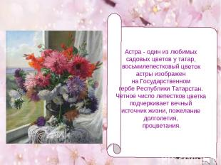 Астра - один из любимых садовых цветов у татар, восьмилепестковый цветок астры и