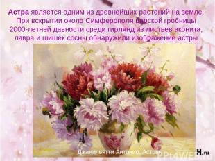 Астра является одним из древнейших растений на земле. При вскрытии около Симферо