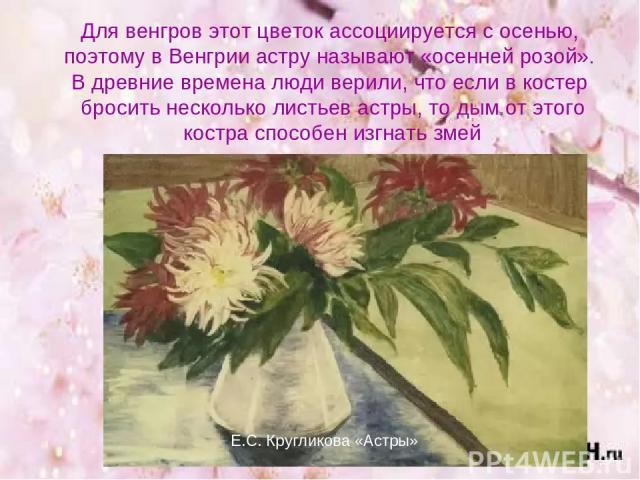 Для венгров этот цветок ассоциируется с осенью, поэтому в Венгрии астру называют «осенней розой». В древние времена люди верили, что если в костер бросить несколько листьев астры, то дым от этого костра способен изгнать змей Е.С. Кругликова «Астры»