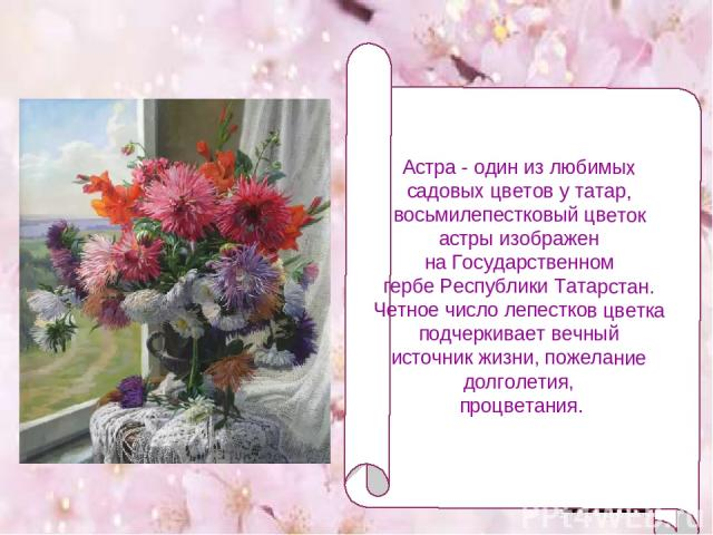 Астра - один из любимых садовых цветов у татар, восьмилепестковый цветок астры изображен на Государственном гербе Республики Татарстан. Четное число лепестков цветка подчеркивает вечный источник жизни, пожелание долголетия, процветания.