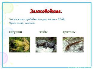 Земноводные. лягушки жабы тритоны Часть жизни проводят на суше, часть – в воде;