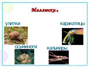 Моллюски. улитки кальмары каракатицы осьминоги