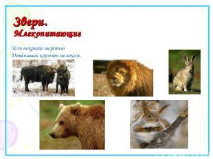 Звери. Млекопитающие Тело покрыто шерстью. Детёнышей кормят молоком.