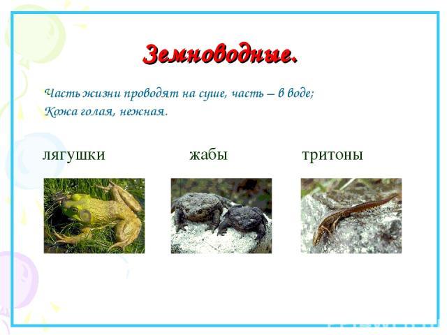 Земноводные. лягушки жабы тритоны Часть жизни проводят на суше, часть – в воде; Кожа голая, нежная.