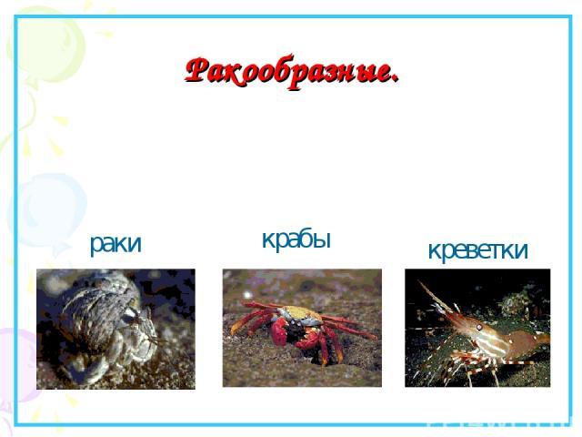 Ракообразные. раки крабы креветки