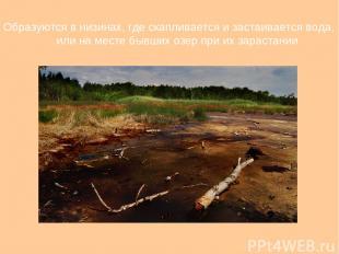 Образуются в низинах, где скапливается и застаивается вода, или на месте бывших