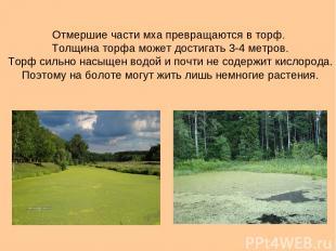 Отмершие части мха превращаются в торф. Толщина торфа может достигать 3-4 метров