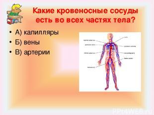 Какие кровеносные сосуды есть во всех частях тела? А) капилляры Б) вены В) артер