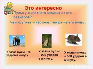 Это интересно Пульс у животного зависит от его размеров? Чем крупнее животное, т