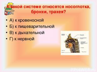 К какой системе относятся носоглотка, бронхи, трахея? А) к кровеносной Б) к пище