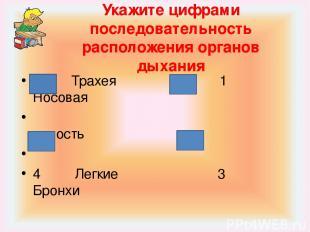 Укажите цифрами последовательность расположения органов дыхания 2 Трахея 1 Носов