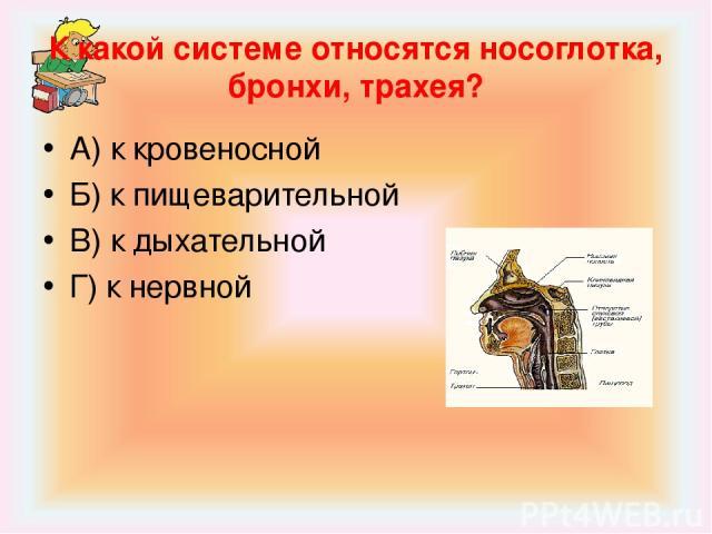 К какой системе относятся носоглотка, бронхи, трахея? А) к кровеносной Б) к пищеварительной В) к дыхательной Г) к нервной
