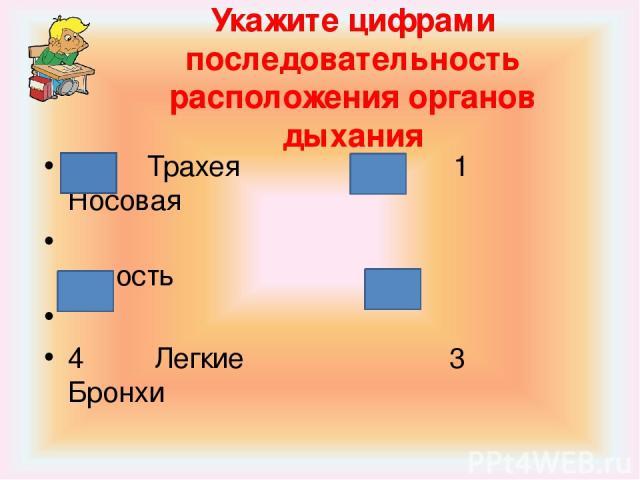 Укажите цифрами последовательность расположения органов дыхания 2 Трахея 1 Носовая полость 4 Легкие 3 Бронхи