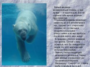 Белый медведь- великолепный пловец, а при нужде — и ныряльщик. Его не страшат о