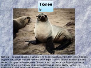 Тюлень Тюлень – хищное животное. Длина тела тюленя достигает 2м. Волосяной покро