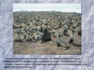 С конца лета и осенью тюлени образуют на берегу залежки, которые хорошо заметны