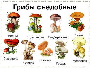 Грибы съедобные Белый гриб Подосиновик Рыжик Подберёзовик Сыроежка Опёнок Лисичк