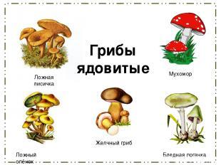 Желчный гриб Ложный опёнок Бледная поганка Мухомор Ложная лисичка Грибы ядовитые