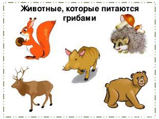 Животные, которые питаются грибами