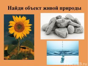 Найди объект живой природы