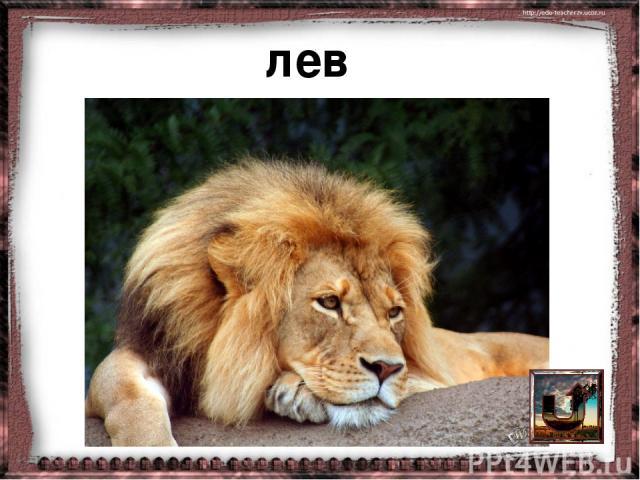 http://rewalls.com/natural/73142-derevya-nebo-oblaka-savanna.html саванна http://daler.ru/open/Tropicheskij-Les-2888.html тропический лес http://wpapers.ru/wallpapers/animals/Leons/2736/1600-1200 лев http://givotnie.com/dikie-givotnie/nosorog носоро…