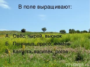 В поле выращивают: А. Овёс, пырей, вьюнок Б. Пшеница, просо, ячмень В. Капуста,