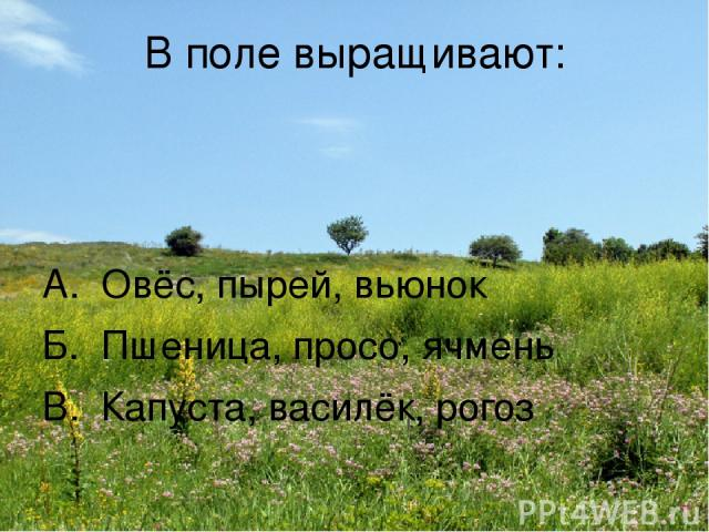 В поле выращивают: А. Овёс, пырей, вьюнок Б. Пшеница, просо, ячмень В. Капуста, василёк, рогоз